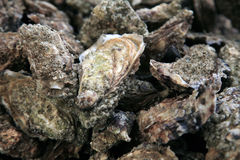 Oysters from Noirmoutier Stock Photography