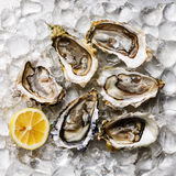 Oysters. Open Oysters and lemon on ice Stock Photo