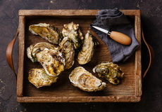 Oysters with oysters knife in box Royalty Free Stock Images