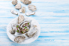 Oysters with parmesan and baked tomatoes Royalty Free Stock Images