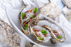 Oysters with parmesan and baked tomatoes Stock Images