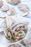 Oysters with parmesan and baked tomatoes Royalty Free Stock Photography