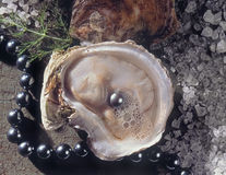 Oysters with Pearl Stock Photos