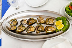 Oysters plate Stock Image