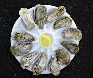 Oysters in a plate Stock Images