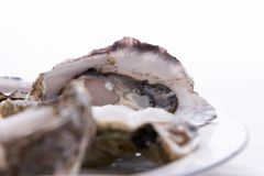 Oysters On A Plate Royalty Free Stock Images