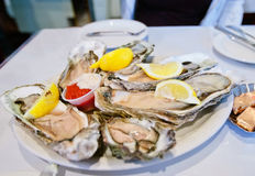 Oysters on plate Stock Photos