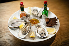 Oysters on a plate Stock Images