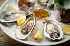 Oysters on a plate Royalty Free Stock Image