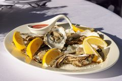 Oysters plate Royalty Free Stock Images