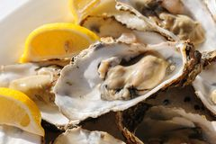 Oysters plate Stock Photos