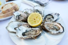 Oysters on a plate Royalty Free Stock Photography
