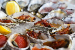 Oysters platter. Fresh oysters in many styles -kilpatrick Stock Images
