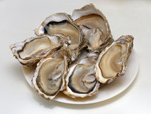 Oysters. Raw oysters presented open on a plate Royalty Free Stock Photo