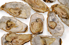 Oysters raw recognized  white  background Stock Photo