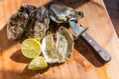 Oysters ready to eat Stock Photo