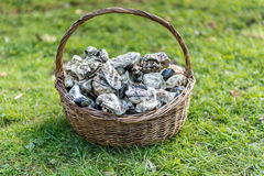 Oysters ready to eat Royalty Free Stock Image