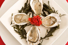 Oysters and roses Stock Photo