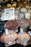 Oysters on sale. Fresh oysters in cold display on the indoor fish market in Bergen, Norway Royalty Free Stock Photo