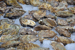 Oysters for sale. Oysters on ice for sale Stock Image