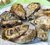 Oysters for sale at the seafood market. On plate Stock Images