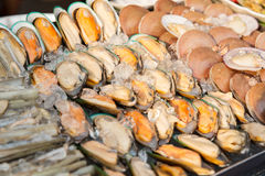 Oysters or seafood on ice at asian street market Royalty Free Stock Image