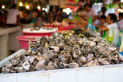 Oysters on the seafood market Stock Photos