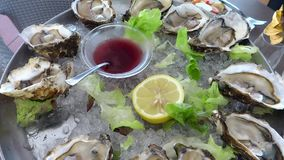 Oysters stock video footage