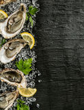 Oysters served on stone plate with ice drift Royalty Free Stock Photos