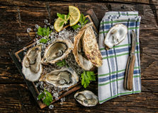 Oysters served on wooden board with ice drift Royalty Free Stock Image