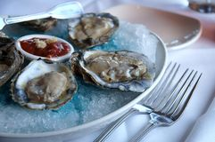 Oysters serving. Half a dozen oysters served with sauce over colored ice Royalty Free Stock Photos