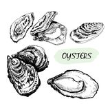 Oysters Stock Photos