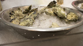 Oysters in shell on ice. Some fresh oysters in shell on ice Royalty Free Stock Photo