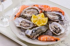 Oysters shell, jumbo shrimp with lemon on ice Stock Image
