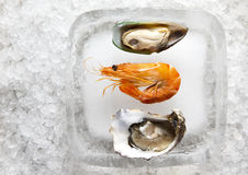 Oysters and shrimp Stock Photo