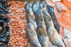 Oysters, shrimps and fish at a market Stock Photography