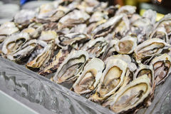 Oysters on a silver tray close up Stock Photography