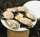 Oysters sold on street Royalty Free Stock Image