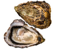 Oysters (Speciales) Royalty Free Stock Image