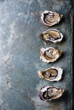 Oysters on stone background Royalty Free Stock Photos