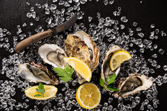 Oysters on stone plate, close-up. Royalty Free Stock Image