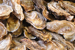 Oysters in tray. On the fish market in sunny day closeup image Royalty Free Stock Photos