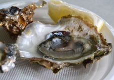 Oysters typical food in Andalucia Spain Stock Photos