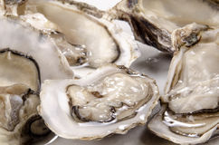 Oysters from the west coast of Ireland Stock Image