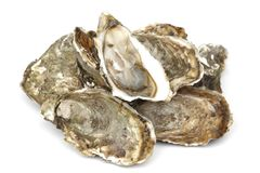 Oysters on white Stock Photo