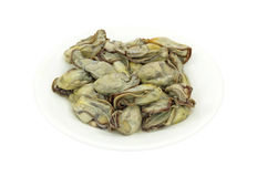 Oysters on white plate Stock Images