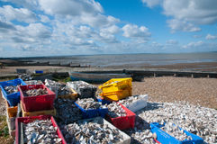 Oysters on Whitstable beach Royalty Free Stock Image