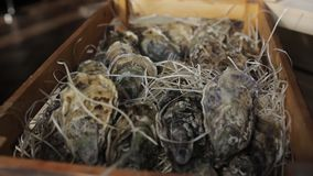 Oysters in a wooden box with hay. Fish restaurant stock footage