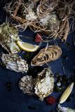 Oysters in a wooden box with lemons and seaweed. Stock Images