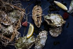 Oysters in a wooden box. Seafood produce on blue background. Royalty Free Stock Image